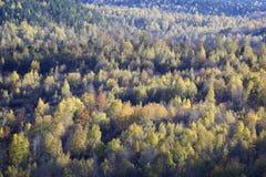 Le début de l'automne - arbres colorés image libre de droits