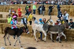 Le début de la truffe juste dans alba (Cuneo), a été tenu pendant plus de 50 années, la course d'âne Photographie stock