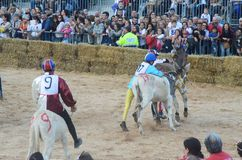 Le début de la truffe juste dans alba (Cuneo), a été tenu pendant plus de 50 années, la course d'âne Photo libre de droits