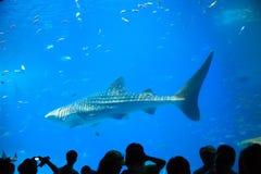 le découpage 3d au-dessus du chemin rendent la baleine de requin d'ombre blanche Images stock