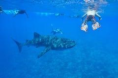 le découpage 3d au-dessus du chemin rendent la baleine de requin d'ombre blanche Images libres de droits
