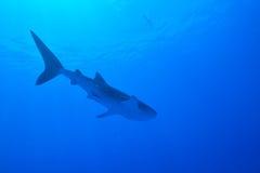 le découpage 3d au-dessus du chemin rendent la baleine de requin d'ombre blanche Image stock