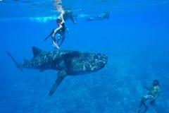 le découpage 3d au-dessus du chemin rendent la baleine de requin d'ombre blanche Photographie stock libre de droits