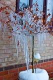 Le dégel Photos libres de droits