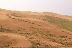 Le désert Images libres de droits