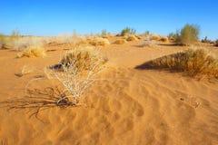 Le désert arénacé Horizontal normal L'Asie centrale uzbekistan image libre de droits