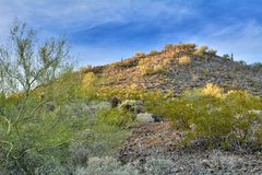 Le désert d'or de ressort image stock