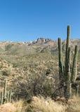 Le désert de Tucson Images libres de droits