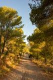 Le désert des paumes à l'aube Photographie stock libre de droits