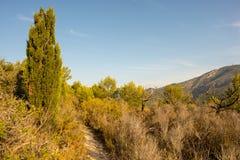 Le désert des paumes à l'aube Photographie stock
