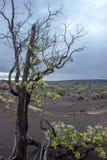 Le désert noir Photographie stock