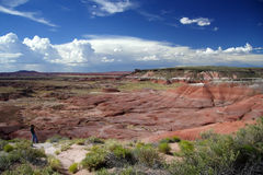 Le désert peint de l'Arizona Images libres de droits