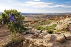 Le désert sec frottent des usines de buisson arénacées Photographie stock libre de droits