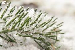 Le détail de la neige a couvert la brindille impeccable en hiver Photographie stock libre de droits