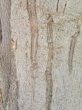 le détail en bois de taxture de la surface est identité photo stock
