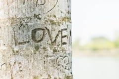 Le ` d'amour de ` des textes sur l'arbre, la période de l'amour Photographie stock libre de droits