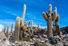 Île d'Incahuasi en Salar de Uyuni en Bolivie Photographie stock