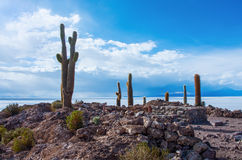 Île d'Incahuasi en Salar de Uyuni en Bolivie Image libre de droits