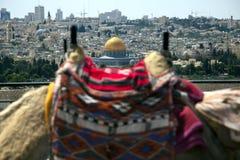 Bosse de chameau et dôme de la roche image libre de droits