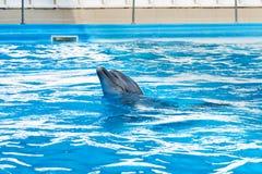 Le dauphin a émergé de l'eau Photo libre de droits