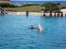 Le dauphin affiche hors fonction par la tête de levage dans l'air Images libres de droits