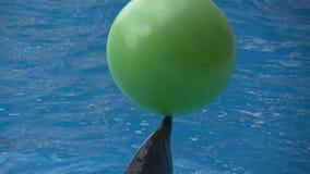 Le dauphin joue une grande boule verte banque de vidéos