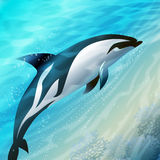 Le dauphin sautant Photographie stock