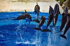 Le dauphin sautant dans l'exposition color?e de jour de dauphin ; C'est une c?l?bration de f?te de notre monde naturel chez Seawo image stock