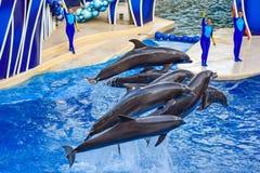 Le dauphin sautant dans l'exposition color?e de jour de dauphin ; C'est une c?l?bration de f?te de notre monde naturel chez Seawo photo stock