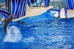 Le dauphin sautant dans l'exposition color?e de jour de dauphin ; C'est une c?l?bration de f?te de notre monde naturel chez Seawo photographie stock libre de droits