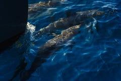 Le dauphin sautant en dehors de l'océan photos libres de droits