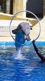 Le dauphin sautent de l'eau dans le regroupement Photographie stock