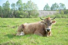 Le ¡ de Ð se trouve aïe sur une herbe Photographie stock libre de droits