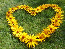 Le ` de coeur de ` des marguerites jaunes un jour d'été Photos stock