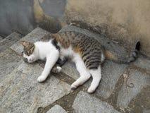 Le ` de gattina de ` de chat après des jeux, des caresses et des explorations Un repos bien mérité Photographie stock