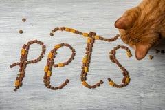 Le ` de mot choie le ` écrit par des aliments pour chats sur le fond en bois blanc Photo libre de droits