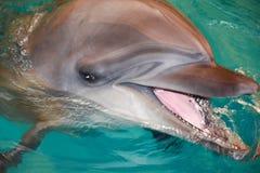 Le delfin i turkosvatten royaltyfria foton