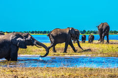 Le delta d'Okavango Image stock