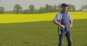 Le den mogna bonden Examining Agricultural Field stock video