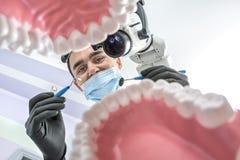 Le dentiste regarde par des modèles de mâchoire images stock