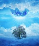 Le dernier arbre Photographie stock libre de droits