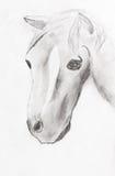 Le dessin de l'enfant - tête de cheval Images libres de droits