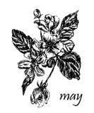 Le dessin du pommier de floraison s'embranche avec des bourgeons et des feuilles, illustration tirée par la main Images libres de droits