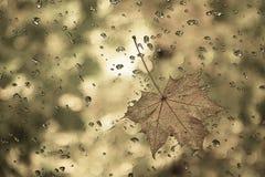 Le dessin graphique d'une feuille d'érable avec de l'eau se laisse tomber photographie stock libre de droits