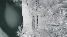 Le dessus aérien regardent vers le bas : Jeunes couples marchant en parc Saison de l'hiver Couples affectueux marchant en parc d' banque de vidéos