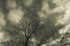 Le dessus d'arbre atteint le ciel Image stock