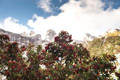 Le dessus de la montagne en parc national, Kota Kinabalu, Sabah Malaysia image libre de droits