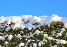 Le dessus de la neige a couvert le buisson de ciel bleu Images libres de droits