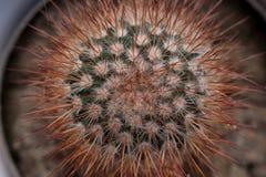 le dièse cloue le cactus Image libre de droits