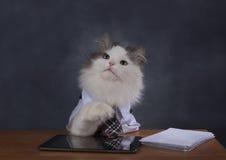 Le directeur de chat manque le bureau images libres de droits